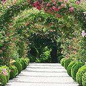 Auf dem Bild ist eine Allee in einem Garten zu sehen