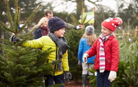 Schon die Kleinen helfen gerne bei der Auswahl des Tannenbaums