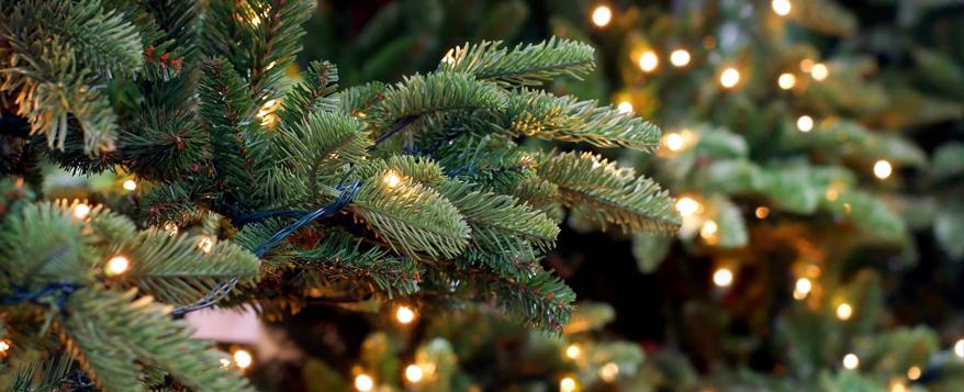 Intakte Isolierungen und Fassungen sowie gesetzliche Prüfsiegel machen Lichterketten zu einer sicheren Weihnachtsbaum-Beleuchtung