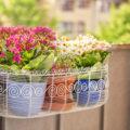 Welche Pflanzen passen auf einen kleinen Balkon?