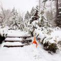 Gartenpflanzen jetzt vor Streusalzschäden schützen