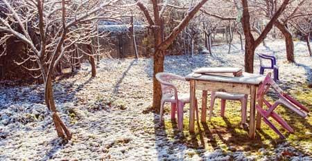 Taut der Schnee im Garten, entfaltet das Streusalz seine schädliche Wirkung