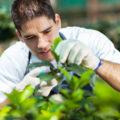 Gartengestaltung: Wie kleine Gärten größer wirken