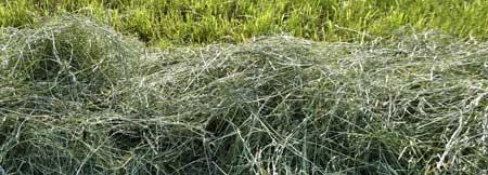 Abgemähtes Gras und Heu sollte vor der Rasenreparatur entfernt werden
