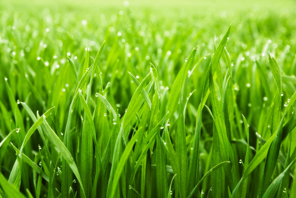 Rasenreparatur In 10 Schritten Zuhause Bei Sam