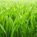 Rasenreparatur in zehn Schritten