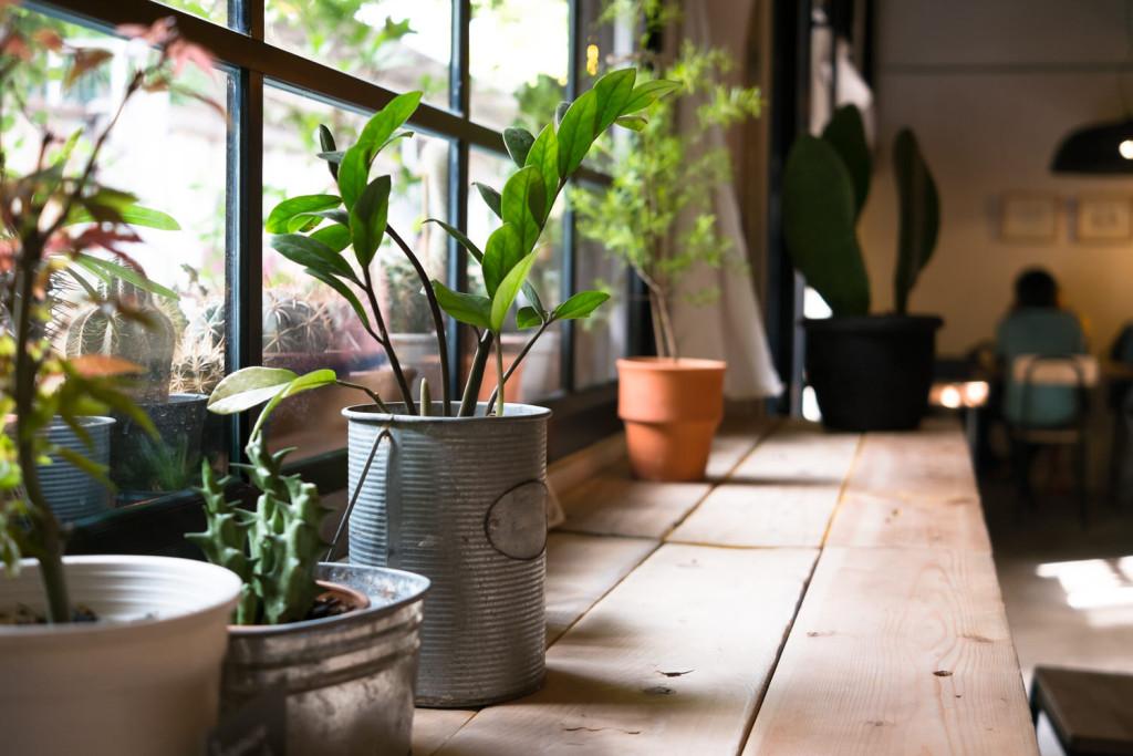 Zimmerpflanzen - Pflegetipps für den Winter