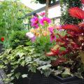 Balkon bepflanzen - darauf musst Du achten