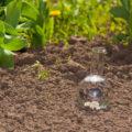 Ob Rasen oder Gemüsebeet: Bodenanalyse sichert optimale Düngung