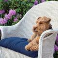 So reinigen Sie Gartenstuhlauflagen richtig