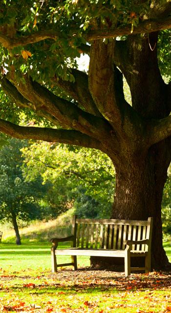 Romantik Pur: Die Bank Unter Einem Baum