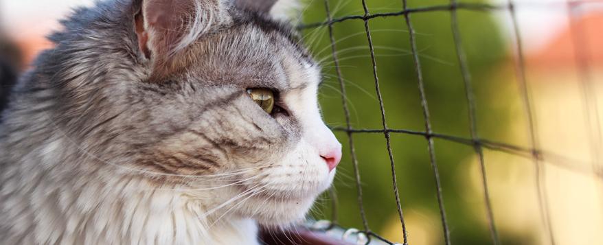 Vor dem Anbringen des Katzennetzes Vermieter um Erlaubnis fragen