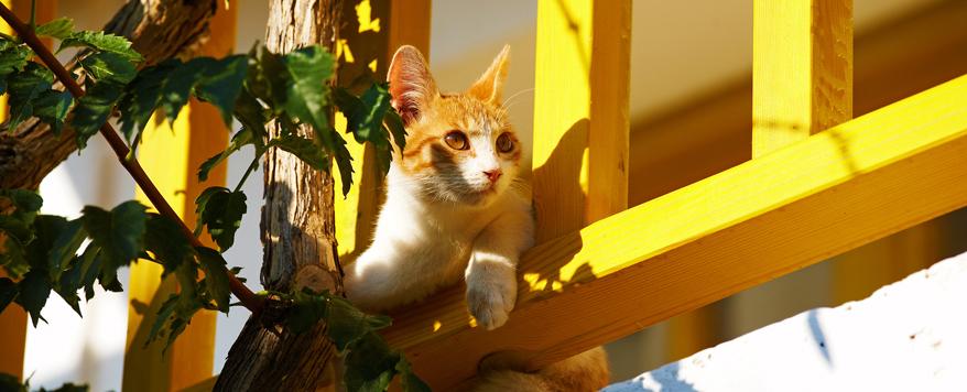 So Machen Sie Den Balkon Katzensicher Zuhause Bei Sam