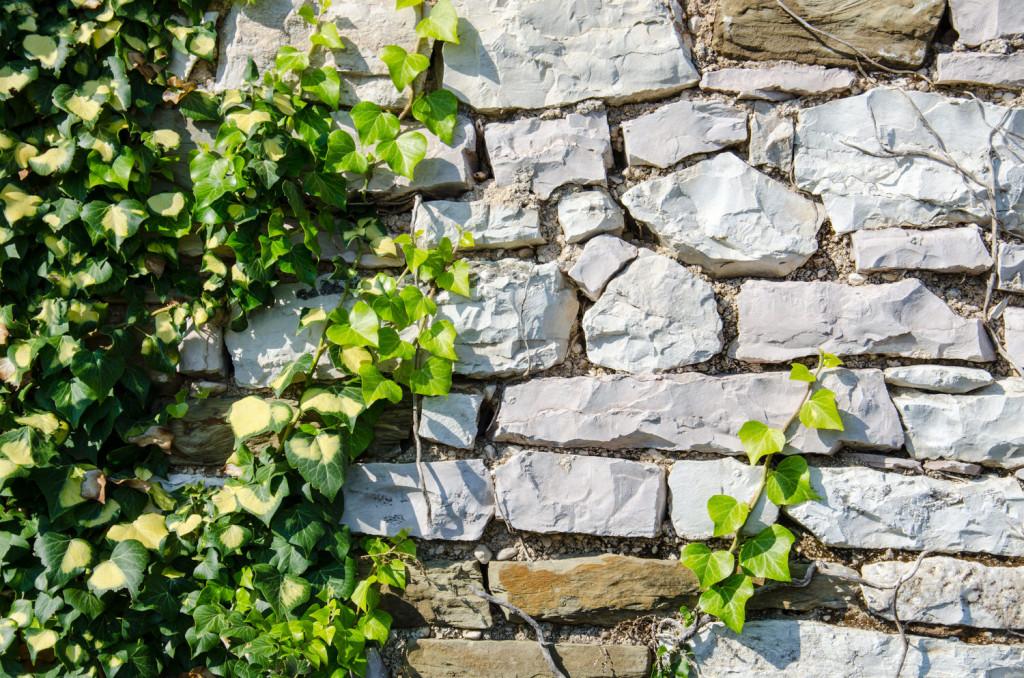 Mit Blühenden Kletterpflanzen Terrasse Und Balkon Gestalten ... Kletterpflanzen Balkon Und Terrassen