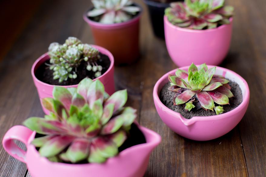 Ungenutzte Tassen sind dekorative Gefäße für Kräuter