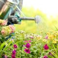 Sommerhitze: Darauf sollte man beim Gießen achten