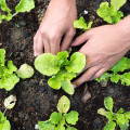 Gemüse im eigenen Garten anbauen – Tipps & Tricks