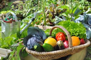 Welches Gemüse im eigenen Garten anbauen