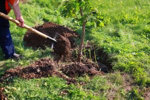 Obstbäume im Garten – Tipps zum Pflanzen, Düngen und Co.