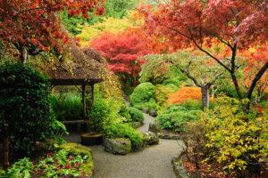 Pflanzen für Farbenpracht im Herbst