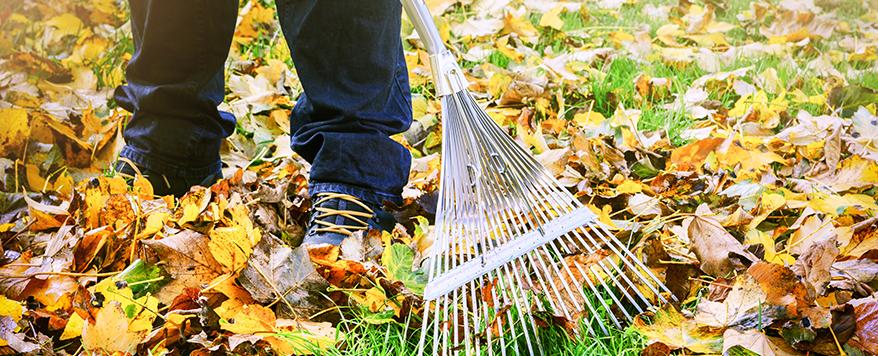 Entfernen Sie den Laub bevor der Winter eintritt