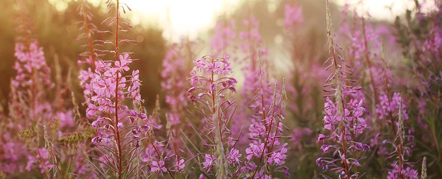 Wildblumen sind wichtig für die Natur