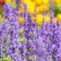 Wilde Blumen im Garten