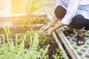 Kräuter im Garten: So gelingt der heimische Anbau