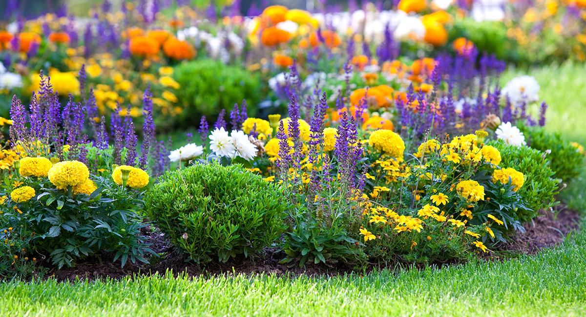 Im August sind durchdacht bepflanzte Beete eine wahre Augenweide.
