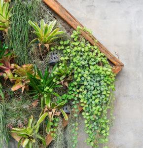 mooswand selber bauen moss wall diy solution from stylegreen moos terrarium idee inspiration. Black Bedroom Furniture Sets. Home Design Ideas