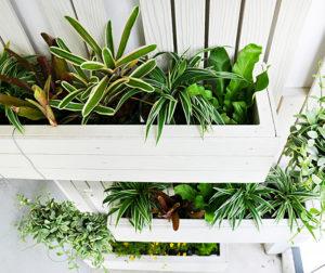 Verschiedene Pflanzen sind dekorativ.