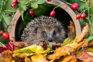 Garten: Rückzugsorte für Wildtiere